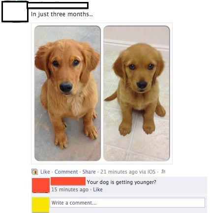 Benjamin Button Dog Funny Meme