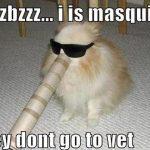 Dog Mosquito Funny Meme
