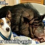 Dog Sleeps With Pig Funny Meme