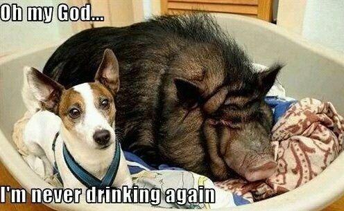 Dog Sleeps With Pig Funny Meme