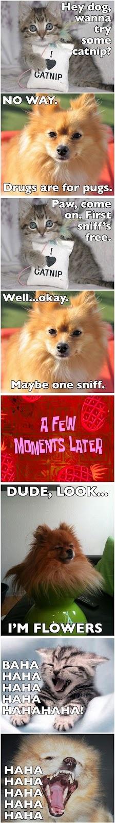 Dog Tries Catnip Funny Meme