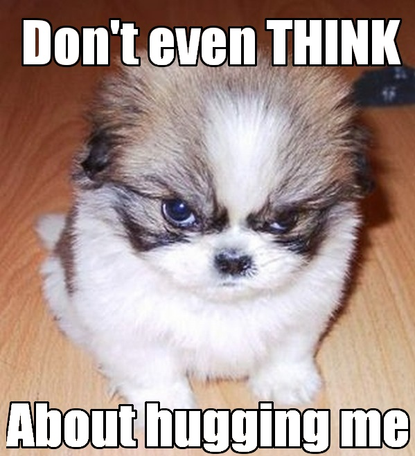 Grumpy dog doesnt like hugs Funny Meme