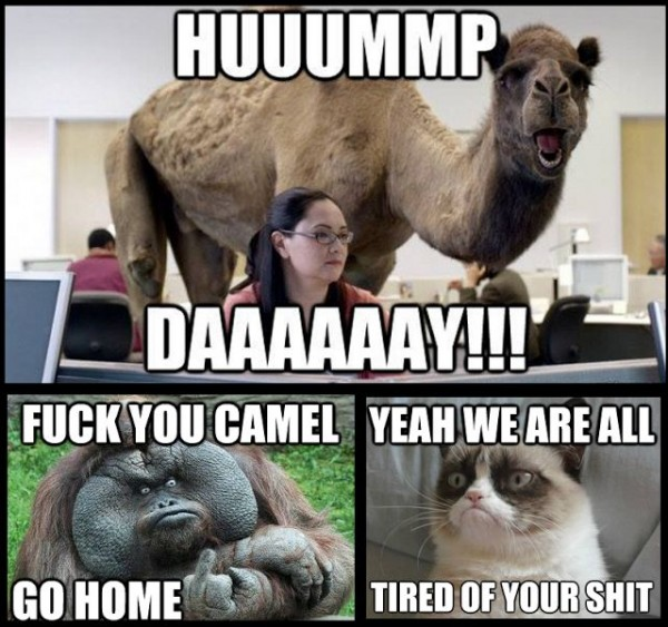 Hump Day is pissing off the rest of the animals Funny Meme