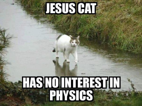 Jesus Cat Funny Meme