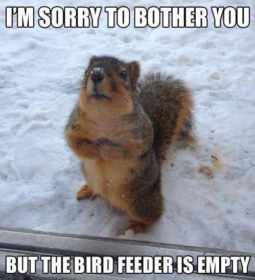 Squirrel Bird Feeder Funny Meme