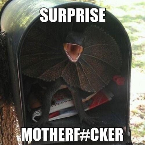 Surprise Mail Funny Meme