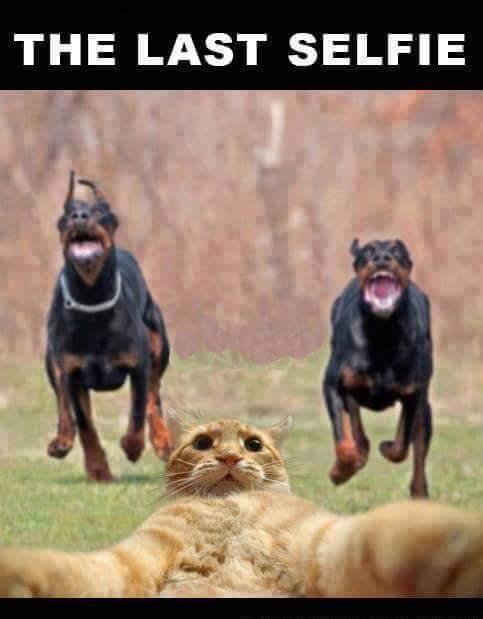 The Last Selfie Funny Meme