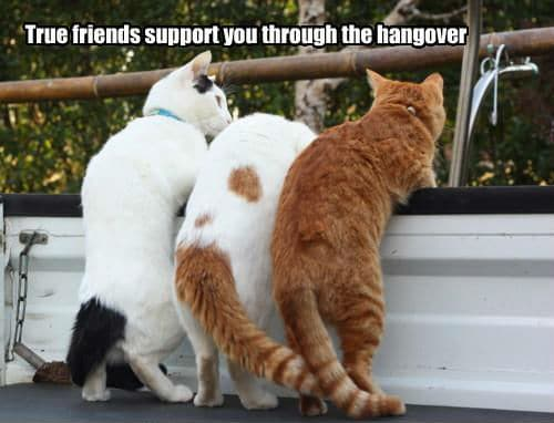 True_Friends_Support_Through_Hangover_Funny_Meme cat memes funny memes,Support Funny Memes