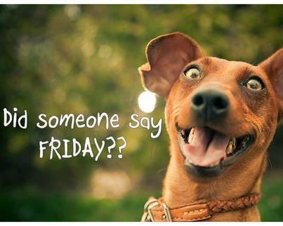 Friday Funny Dog Meme